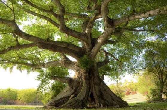 tree tapestry 2