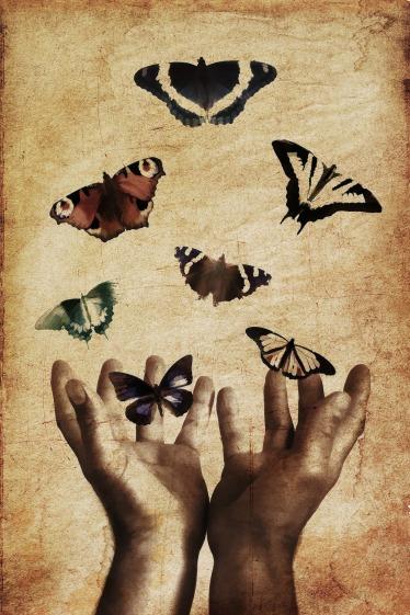 butterflies-843298_1920